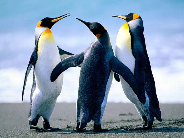 File:Penguins MG12 .jpg
