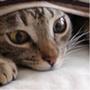 Kuzura avatar 100px