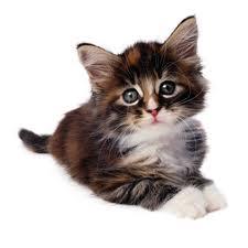 File:Cat124.jpg