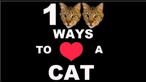 100 Ways To Love A Cat Ways 1-100