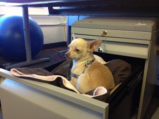 File:Daisy in desk.jpg