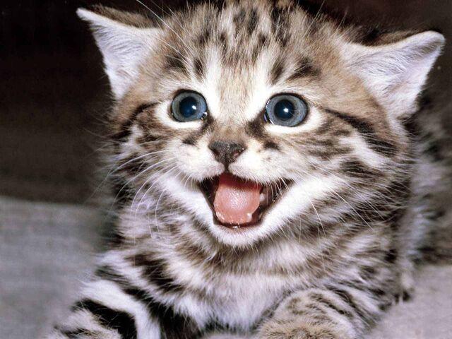File:Cute cat.jpg
