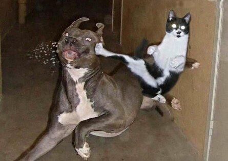 File:Funny-cat-at-yapshow-17 kindlephoto-118158126.jpg