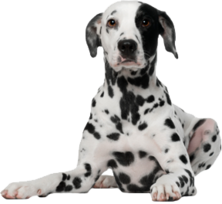 Dog PNG157