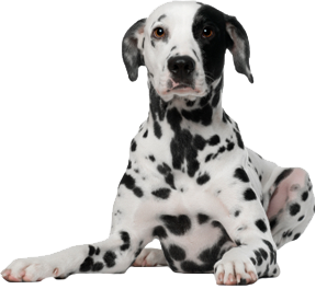 File:Dog PNG157.png