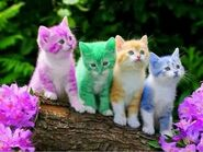 Cute Colorful Kittens.