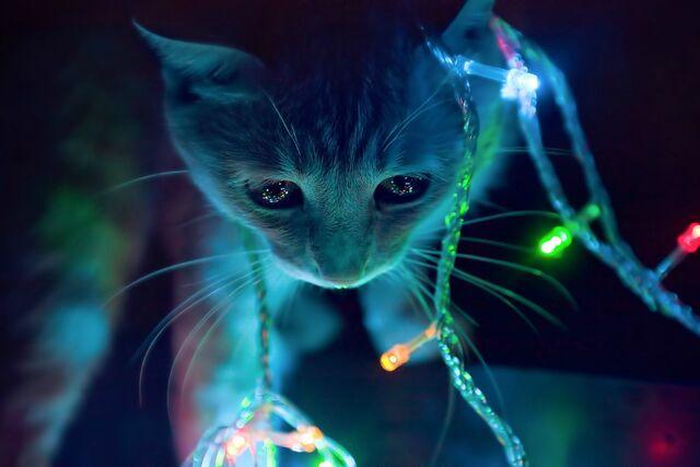 File:Fondo de gato.jpg