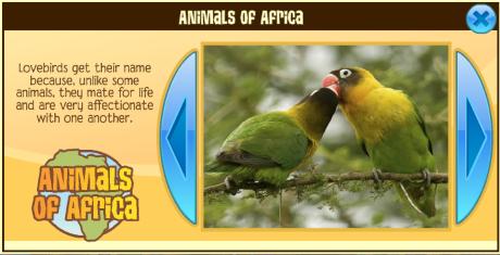 Animal Jam Love Birds.