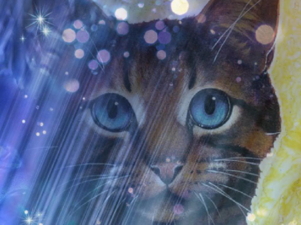 image - warrior cats wallpaper 2 | community central | fandom