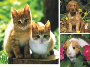 File:Animales-domesticos-2.jpg