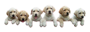 Puppies-climbing-transparent-image
