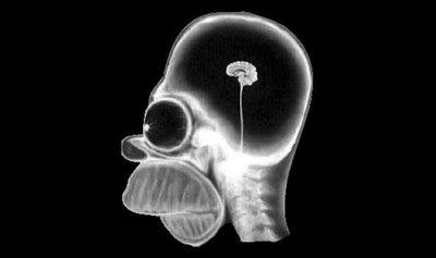 File:Cool Blog Sociale - 15 July 2008 - Homer Simpson's head through X-ray.jpg