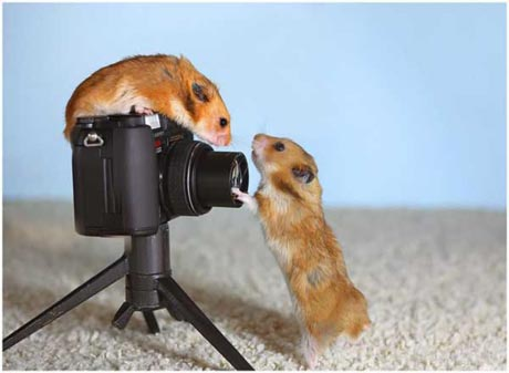 File:Funny-hamster-04.jpg