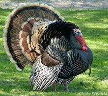 Turkey download