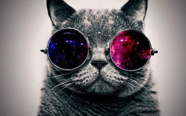 File:Cat-Glasses-Wallpaper-HD.jpg