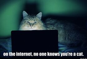 On The Internet No One Knows You re A Cat