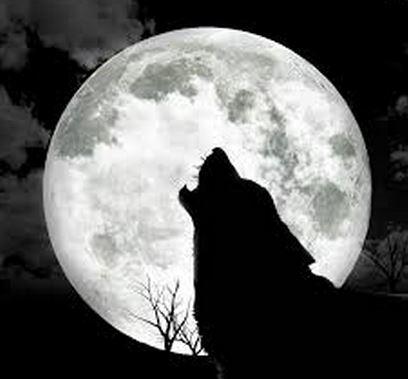 File:Wolf of Darkness.JPG
