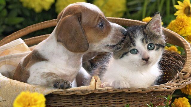 File:Pet-love 1.jpg