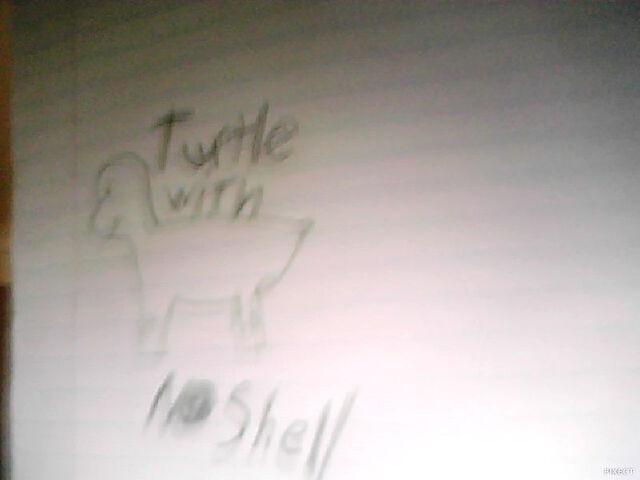 File:Turtle no shell.jpg