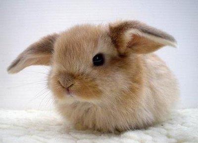 File:Cute bunny41.jpg