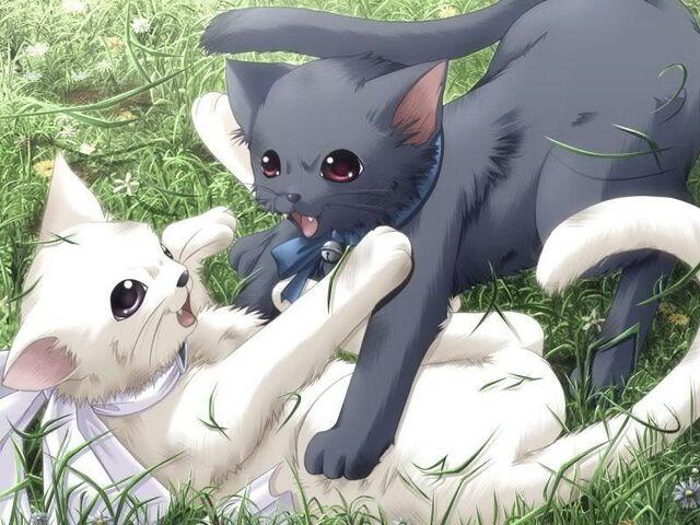 File:Cats-anime-animal-6657215-800-600.jpg