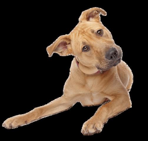 File:Cute-dog-transparent-background.png
