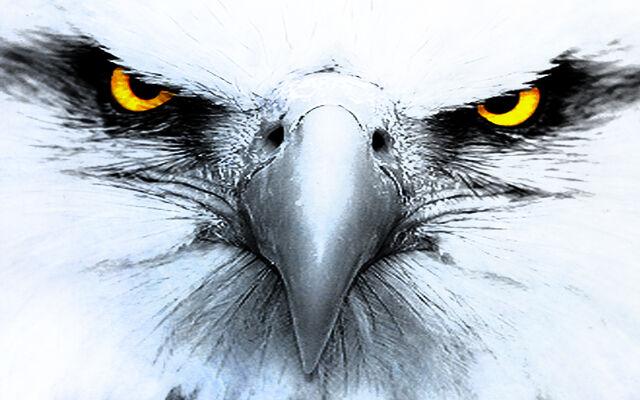 File:Eagle1.jpg