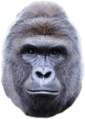 Thumbnail for version as of 15:20, January 18, 2017