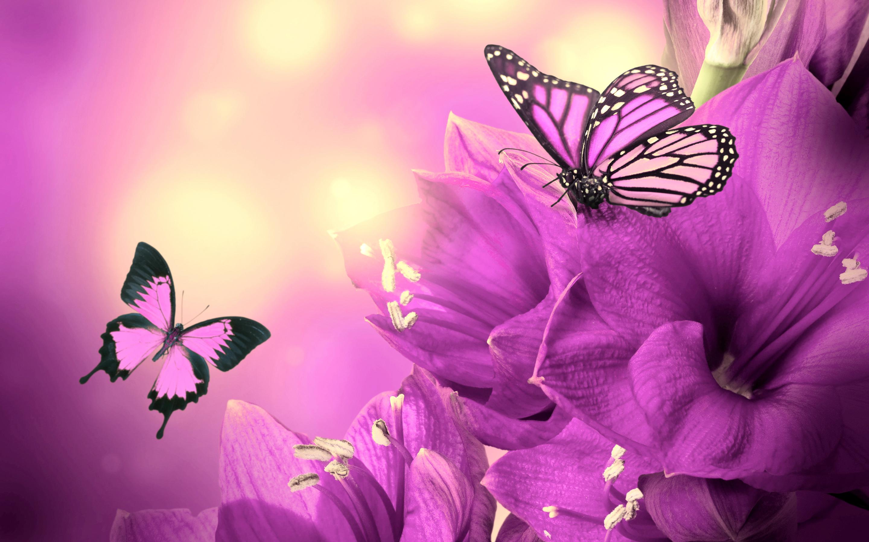 Image Purple Flowers Butterflies Wideg Community Central