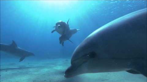 Ambient Music Ocean Dolphins-0