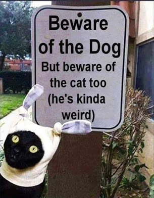 File:FIt's Not Just The Dog You Should Be Afraid Of.jpg
