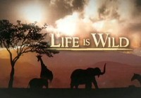 File:Lifeiswild.jpg