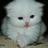 Miha40's avatar