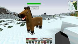 Horse the Horse