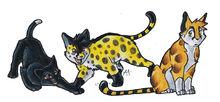 Puppy Cheetah