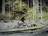 Bigfoot (Canon, Folklore)/Sans2345