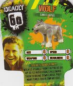 Deadly60Factsheet-Wolf