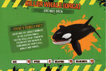 Deadly60Factsheet-Orca