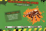 Deadly60Factsheet-Goliath Bird Eating Spider