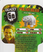 Deadly60Factsheet-Polar Bear