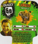 Deadly60Factsheet-Lioness