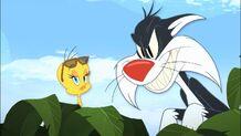 Sylvester2011