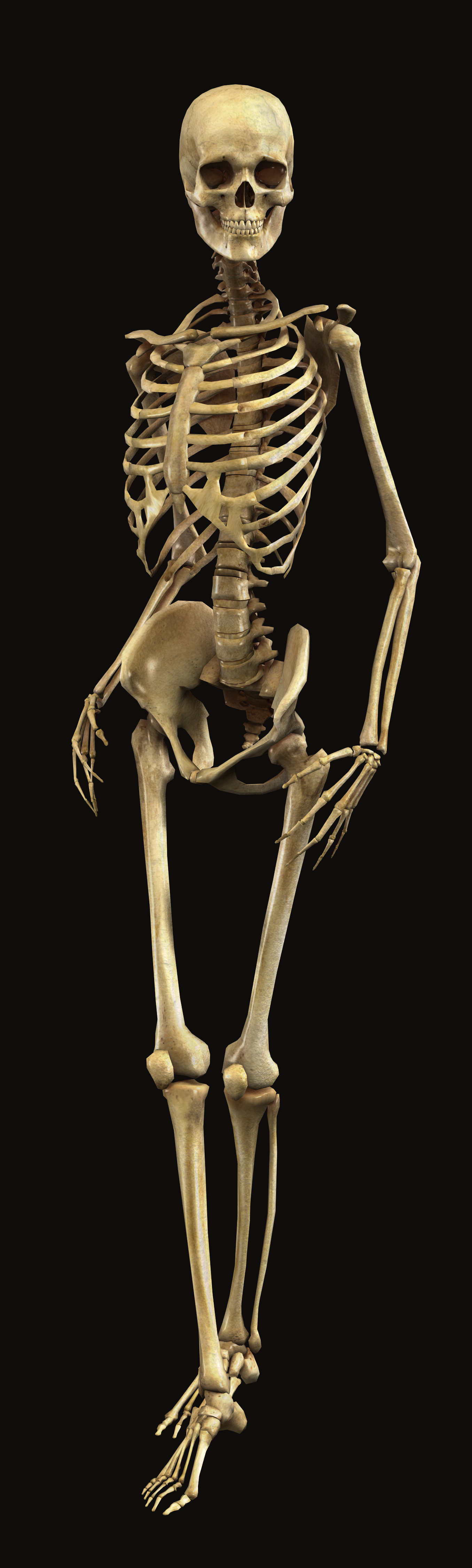 Category Skeletons