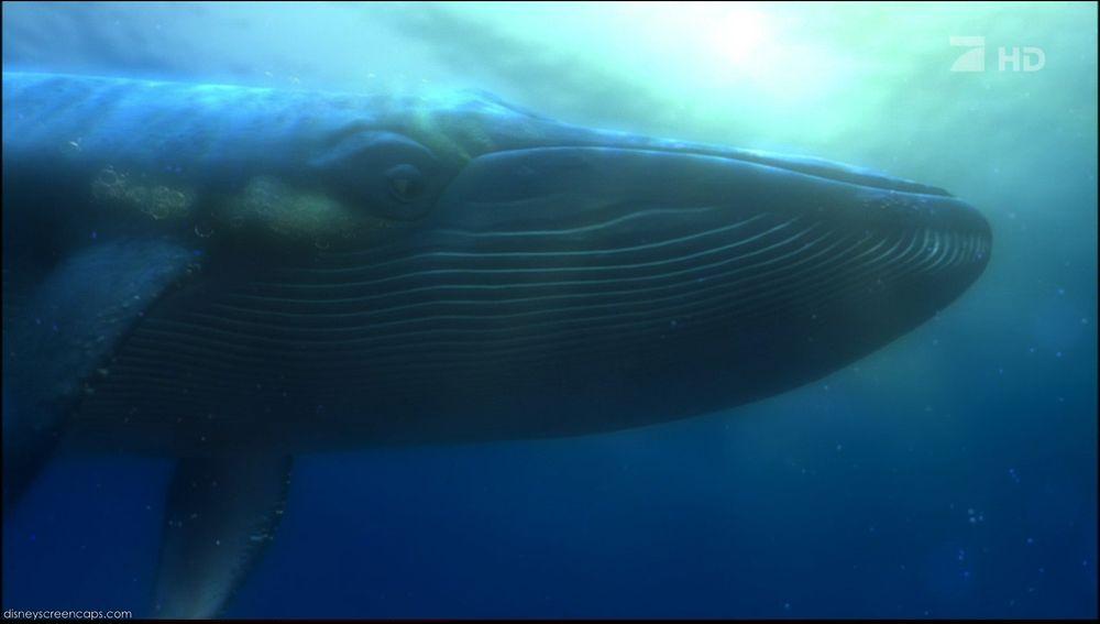 Whale (Finding Nemo) | Fictional Characters Wiki | FANDOM ...