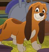 Copper Pup