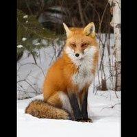 File:Foxtreeclan 5289226.jpg