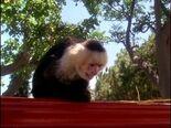 Monkeyanimal