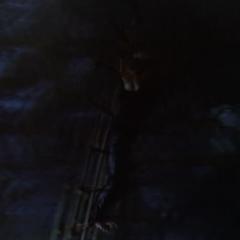 Necron flings the rack.