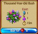 Thousand year old bush
