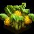 Sea18 plant